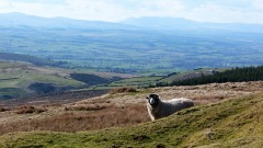 Eden Valley - or is it Laois?