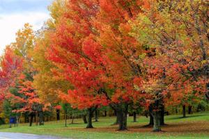 Fall-Foliage-1-Large