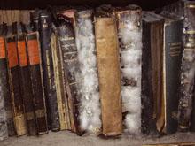 MouldyBooks