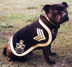 Regimental Mascot
