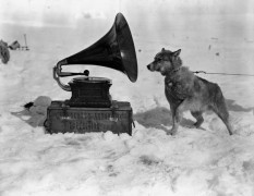 PONTING_1911_Dog_Listening_to_Gramophone_Antartica-620x481